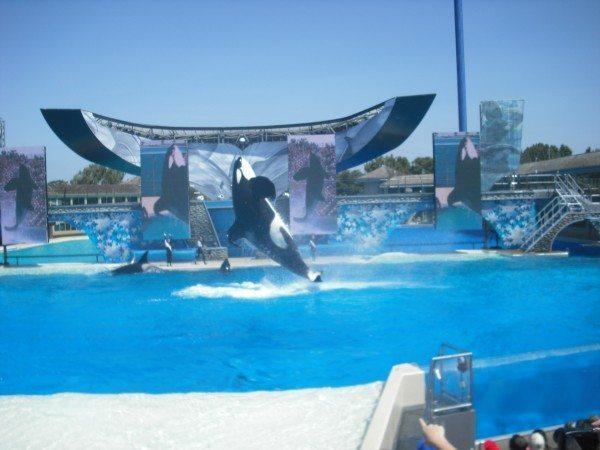 טיול 2009 – פרק ד' סן דייגו: מוזיאונים, עולם הים, גן החיות ועוד