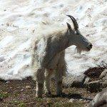 עז הרים - לוגאן פאס, פארק לאומי גליישר