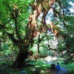 ביערות הגשם של פארק אולימפיק
