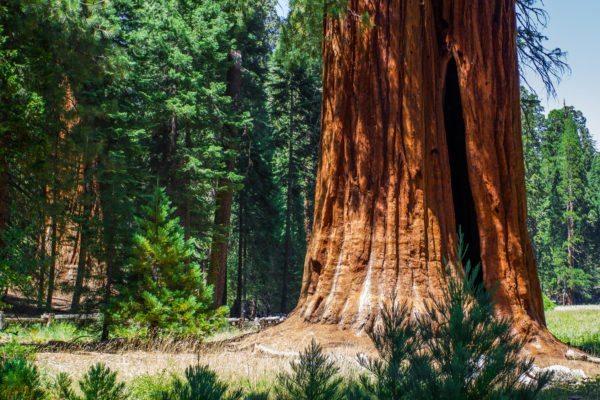 פארק לאומי סקויה וקינגס קניון, קליפורניה
