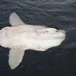 יום 3 – לוויתנים ודולפינים במונטריי