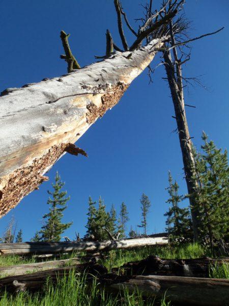 """מתקן לתליית התיקים גבוה, כדי להרחיק אותם מהדובים. נקודת לינה מאושרת ב""""שטח"""" בפארק לאומי ילוסטון"""