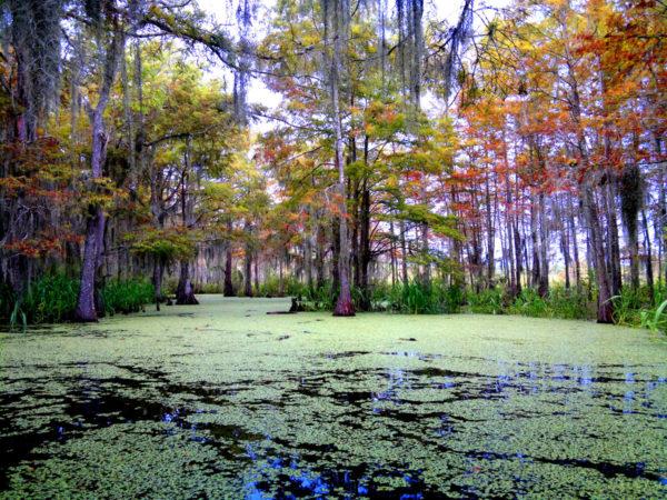 סיור ביצות ליד ניו אורלינס