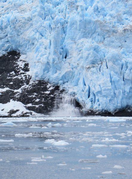 סיכום אלסקה: מוס בגירדווד ולוויתנים בסיוורד