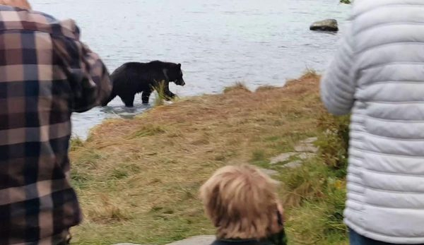 נפרדים מאלסקה עם חווית דובים אינטנסיבית במיוחד